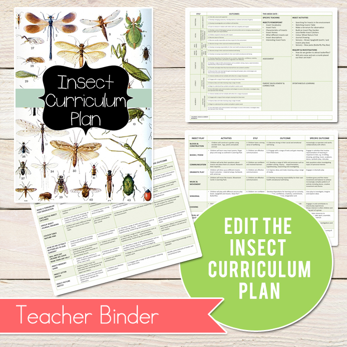 Insect-Curriculum-Plan-3