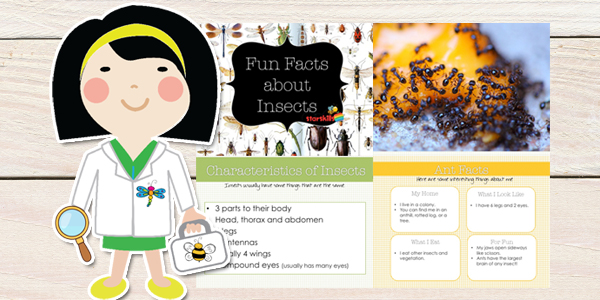 Insect-Curriculum-Plan-5