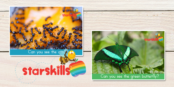 Insect-Curriculum-Plan-6