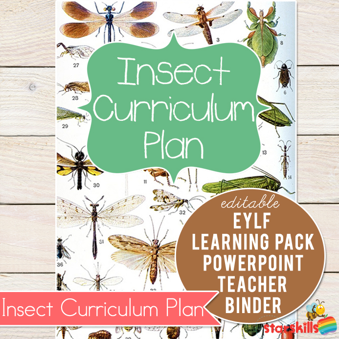 Insect-Curriculum-Plan